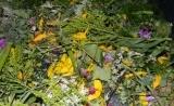 Blütenmischungen