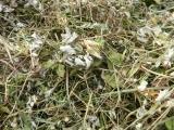 Kräuter- und Blütenmischungen