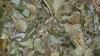Grobi - Blättermix ab 100 g