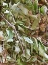 XXL Grobi - Blättermix ab 100 g